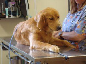 Surgery at Granville Veterinary Clinic, Granville Ohio