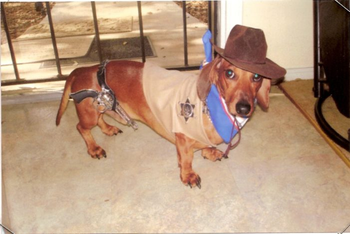 Halloween dog in costumer safety tips